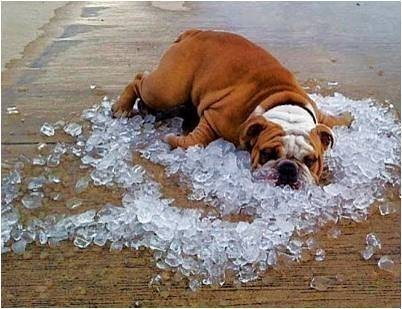dog-enjoying-cool-ice